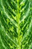 Zbliżenie liścia zielony tło w ogródzie Zdjęcie Royalty Free