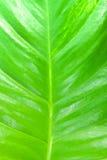 Zbliżenie liścia zielony tło w ogródzie Zdjęcia Stock