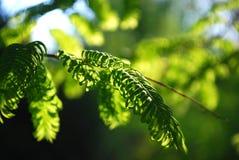 Zbliżenie liście w słońca świetle Obrazy Stock