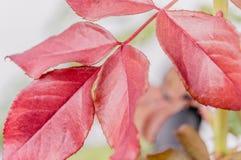 Zbliżenie liście zmienia spadać kolory Zdjęcie Stock