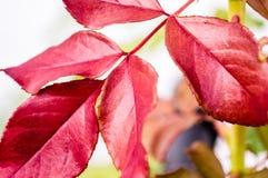 Zbliżenie liście zmienia spadać kolory Obraz Stock