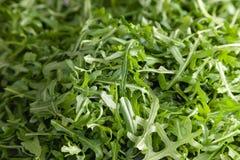 Zbli?enie makro- ?wie?a ziele? wybieraj?cy li?cie arugula ziele Poj?cie dieta, jarosz, naturalny, niskokaloryczny posi?ek, obrazy stock