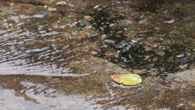 Zbliżenie materiału filmowego strzał spada na wody powierzchni na podeszczowej drodze deszcz zdjęcie wideo
