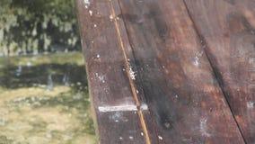 Zbliżenie materiału filmowego strzał spada stara drewniana deska stołu powierzchnia deszcz zbiory wideo