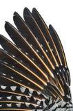 Zbliżenie migotanie wierzchu ptasi skrzydło zdjęcia royalty free