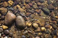 Zbliżenie natury koloru kamień w jasnym wodnym rzecznym tle, natury pojęcie Zdjęcie Stock