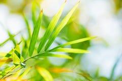 Zbliżenie natury widok zielony liść na świetle słonecznym Fotografia Stock