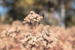 Zbliżenie obrazek brąz roślina z brązu rozmytym tłem spadek, natura, scena, tło, rocznik, markotny; fotografia stock