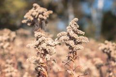Zbliżenie obrazek brąz roślina z brązu rozmytym tłem spadek, natura, scena, tło, rocznik, markotny; obrazy stock