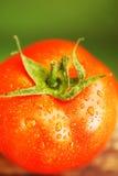 zbliżenie opuszcza pomidor czerwoną wodę Obrazy Royalty Free