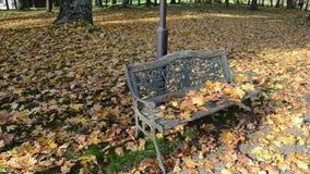Zbliżenie parkowej ławki jesieni klonowego drzewa dekoracyjni liście ruszają się wiatr