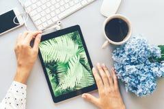 Zbliżenie pastylka z obrazkiem paproć, miejsce pracy w biurze, żeńskie ręki trzyma przyrząd zdjęcia royalty free