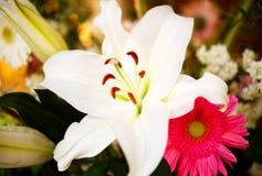 Zbliżenie piękna biała leluja zdjęcie stock