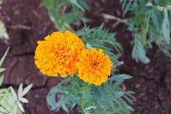 Zbliżenie piękni kolorowi kwiaty, Naturalni fotografia stock