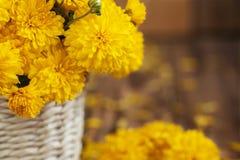 Zbliżenie Piękny bukiet żółte chryzantemy kwitnie w wi Zdjęcie Royalty Free