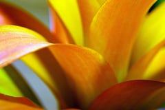 Egzotyczny kwiat Obrazy Royalty Free