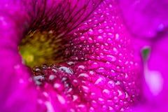 Zbliżenie Piękny kwiat z rosą Zdjęcia Royalty Free