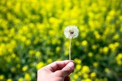Zbliżenie piękny ogrodowy kwiatu pole troszkę kwitnie backg Fotografia Royalty Free