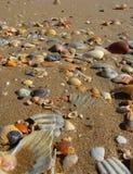 Zbliżenie plaża wypełniał z różnorodność skorupami obrazy royalty free