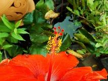 Zbliżenie poślubnika pollen Fotografia Royalty Free