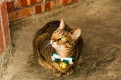 Zbliżenie Pojedynczy śliczny kota obsiadanie przed sklepem w Jiufen V obrazy stock