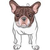Wektorowy nakreślenie domowego psa Francuskiego buldoga traken royalty ilustracja