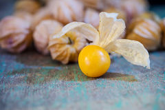 Zbliżenie przylądka pomarańczowi organicznie agresty Zdjęcie Royalty Free