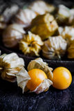 Zbliżenie przylądka pomarańczowi organicznie agresty Zdjęcia Royalty Free