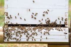 Zbliżenie pszczoła rój Obrazy Royalty Free
