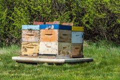 Zbliżenie pszczoły brzęczy wokoło uli fotografia stock