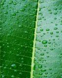Zbliżenie rosa kropelki na zielonych liściach Fotografia Stock