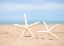 Zbliżenie rozgwiazda na plaży Fotografia Stock