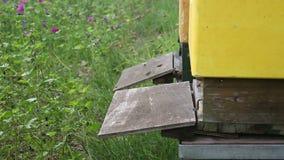 Zbliżenie ruchliwie pasieka z pszczołami zdjęcie wideo