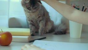 Zbliżenie rysuje obrazek i muska jej zwierzę domowe kota mała dziewczynka zbiory
