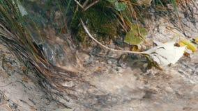 Zbliżenie rzeka w lesie, szczegół bieżąca woda Czysty halny strumień z jasną wodą płynie przez zielonego terenu zbiory