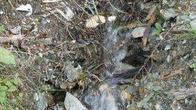 Zbliżenie rzeka w lesie, szczegół bieżąca woda Czysty halny strumień z jasną wodą płynie przez zielonego terenu zdjęcie wideo