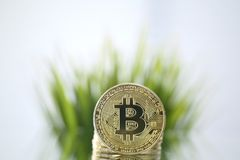 Zbliżenie stawia czoło kamerę naprzeciw o zielonej trawy Złoty Bitcoin Wirtualny anonimowy pieniądze i szybki kursowy przyrost obraz royalty free