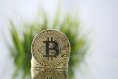 Zbliżenie stawia czoło kamerę naprzeciw zielonej trawy Złoty Bitcoin Wirtualny anonimowy pieniądze i szybki kursowy wzrostowy poj fotografia royalty free