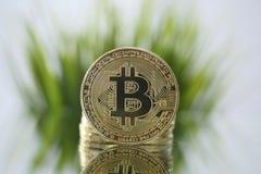 Zbliżenie stawia czoło kamery opposite zielona trawa Złoty Bitcoin Wirtualny anonimowy pieniądze i szybki kursowy przyrost zdjęcia royalty free