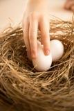 Zbliżenie strzał podnosi jeden jajko od gniazdeczka ręka Obrazy Stock