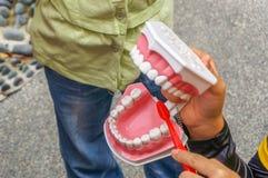 Zbliżenie strzelał żeński instruktor trzyma out ząb replikę zdjęcie stock