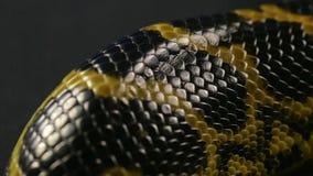 Zbliżenie strzelanina snakeskin zbiory