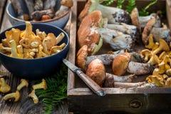 Zbliżenie surowe dzikie pieczarki pełno smak i aromatyczny obrazy stock