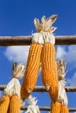 Zbliżenie Suszył kukurydzanego obwieszenie na drewnianym poręczu Obraz Royalty Free