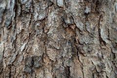Zbliżenie szorstka drewniana tekstura dla tła zdjęcie royalty free
