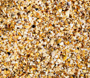 Zbliżenie tekstury wybrzeże skorupy Obraz Royalty Free