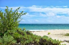 Zbliżenie tropikalni krzaki przy białą piasek plażą Obrazy Royalty Free