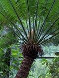 Tropikalny drzewko palmowe w Luksusowym środowisku Zdjęcie Royalty Free