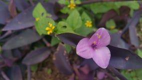 Zbliżenie tułacza żyd roślina Fotografia Stock