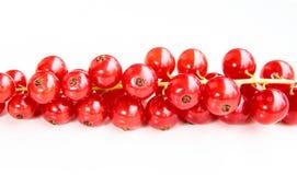 Zbliżenie wiązka delikatni i świezi redcurrants zdjęcie royalty free
